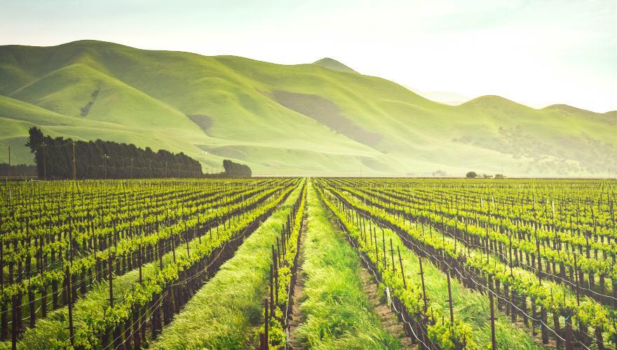 Importancia de la agricultura sostenible para el sector de alimentos