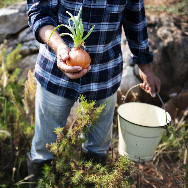 Agricultura sostenible: clave para la industria alimentaria